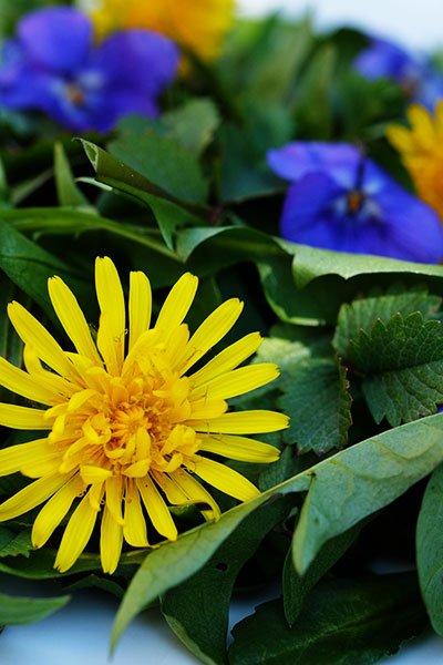 Misticanza di foglie e fiori di Pratolina, Pimpinella, Tarassaco, Piantaggine e Violetta 2