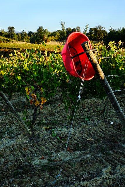 vigne_2
