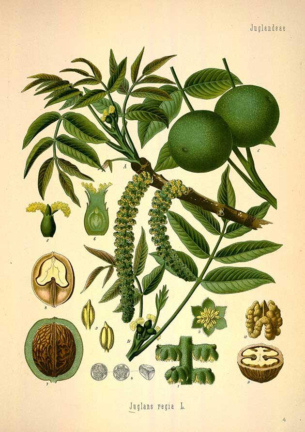 medicinal-plants-6