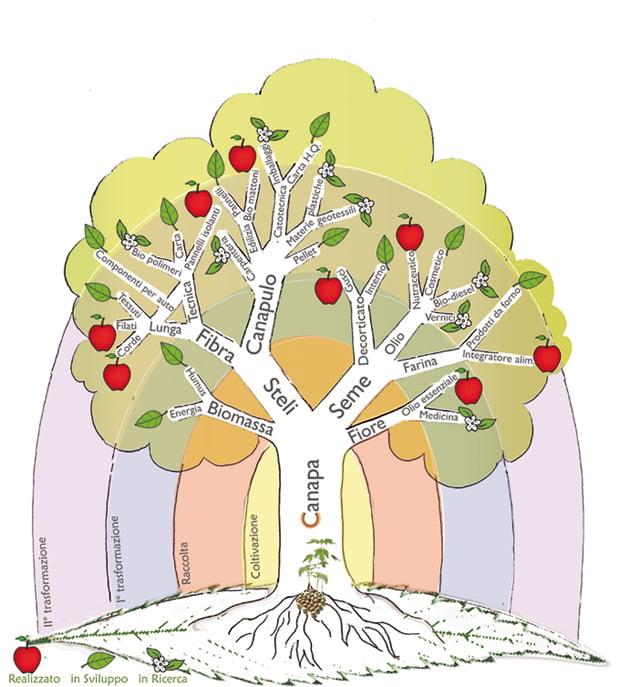 albero_canapa_small