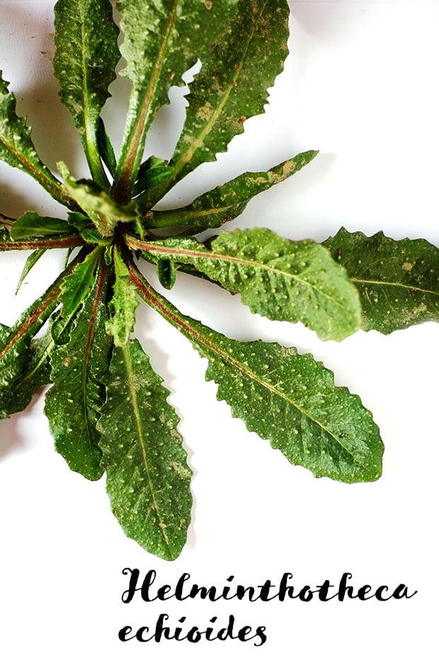 Crostini alle erbe e ceci con fiori di rosmarino e olio e.v.d'oliva Moraiolo 4