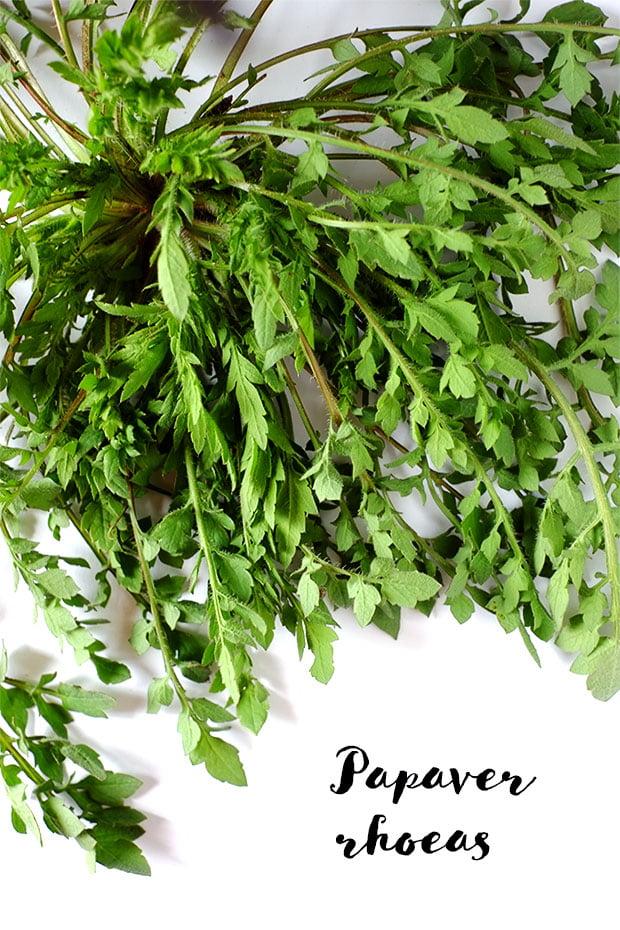 Crostini alle erbe e ceci con fiori di rosmarino e olio e.v.d'oliva Moraiolo 3