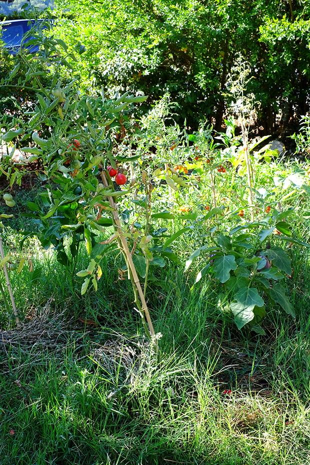 Diario di un pollice nero che vuole diventare verde (e una tartare di melanzane) 2