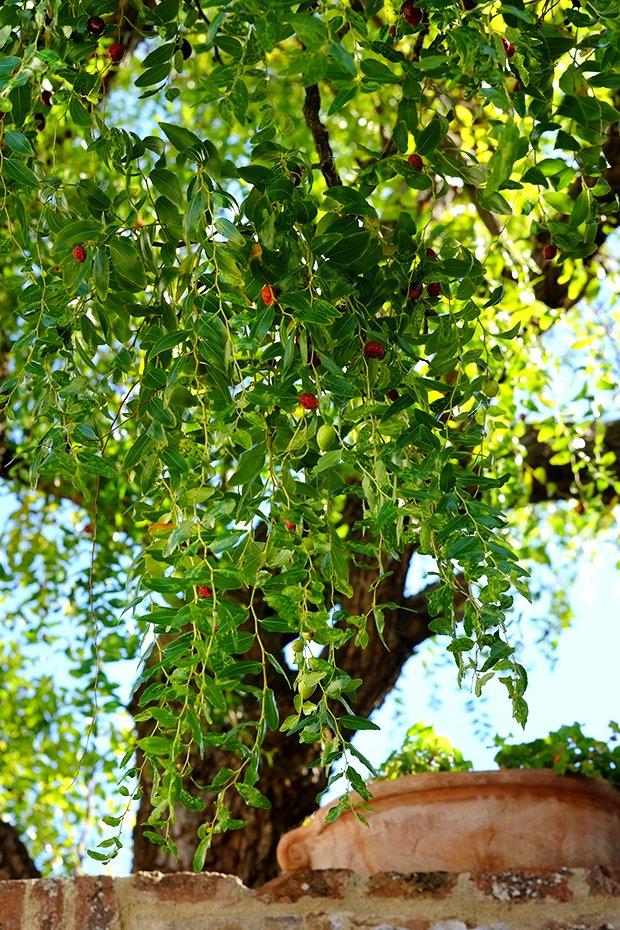 Conserva di giuggiola e mela 2