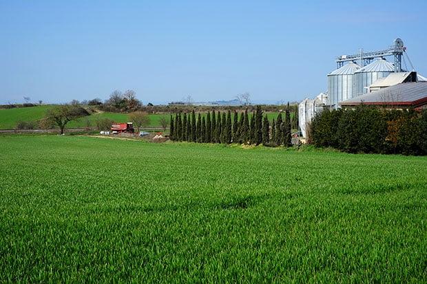 Le nuove filiere locali del grano: Il pane di grani antichi del Podere Pereto 3