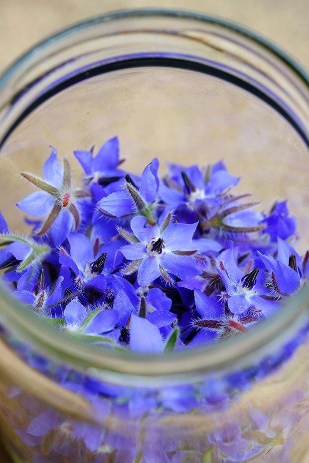Aceto aromatizzato alla borragine e finocchietto selvatico 4