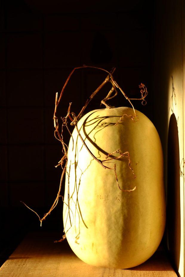 Composta (e mostarda) di zucca cedrina, e le incredibili storie dei semi 2