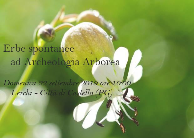 Erbe spontanee ad Archeologia Arborea 7
