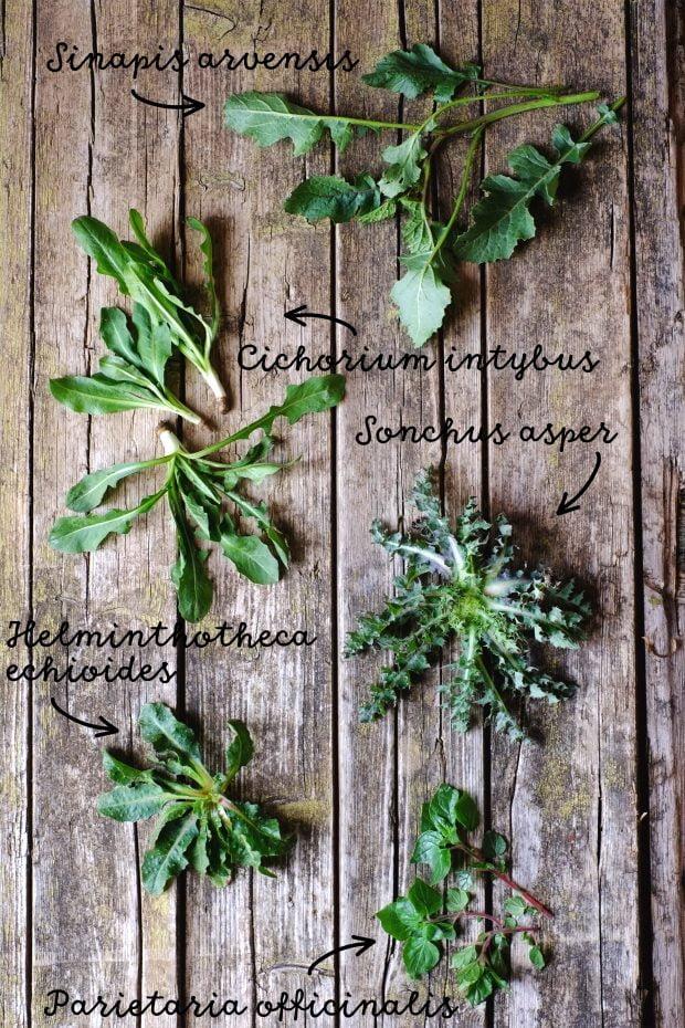 Ribollita d'erbe spontanee e cicerchie - Benvenuta primavera! 2