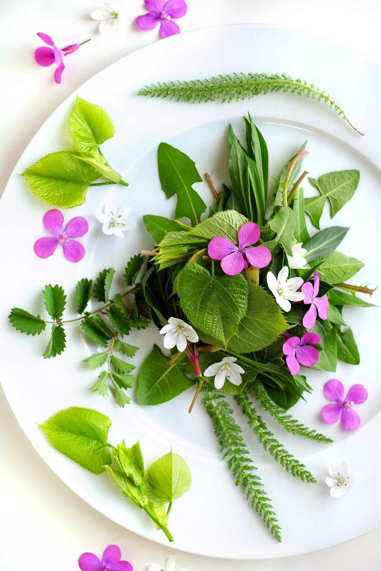 Misticanza di foglie e fiori d'aprile, con foglie giovani di tiglio e fiori di lunaria 48