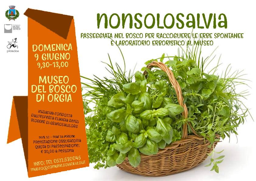Riconoscimento erbe con laboratorio al Museo del Bosco 7