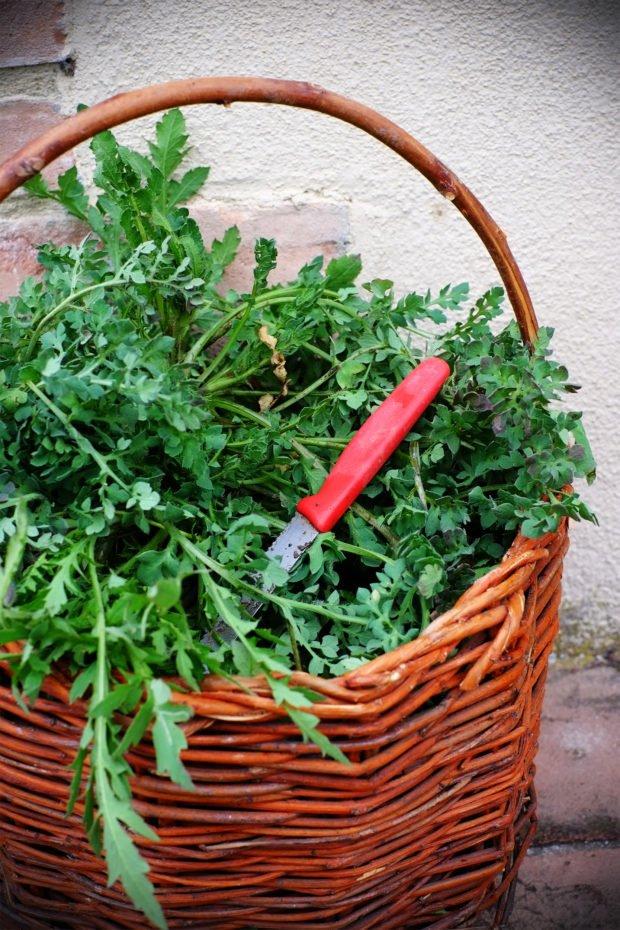 Cassoni con le rosole (ovvero, piadina ripiena con foglie di papavero) 2