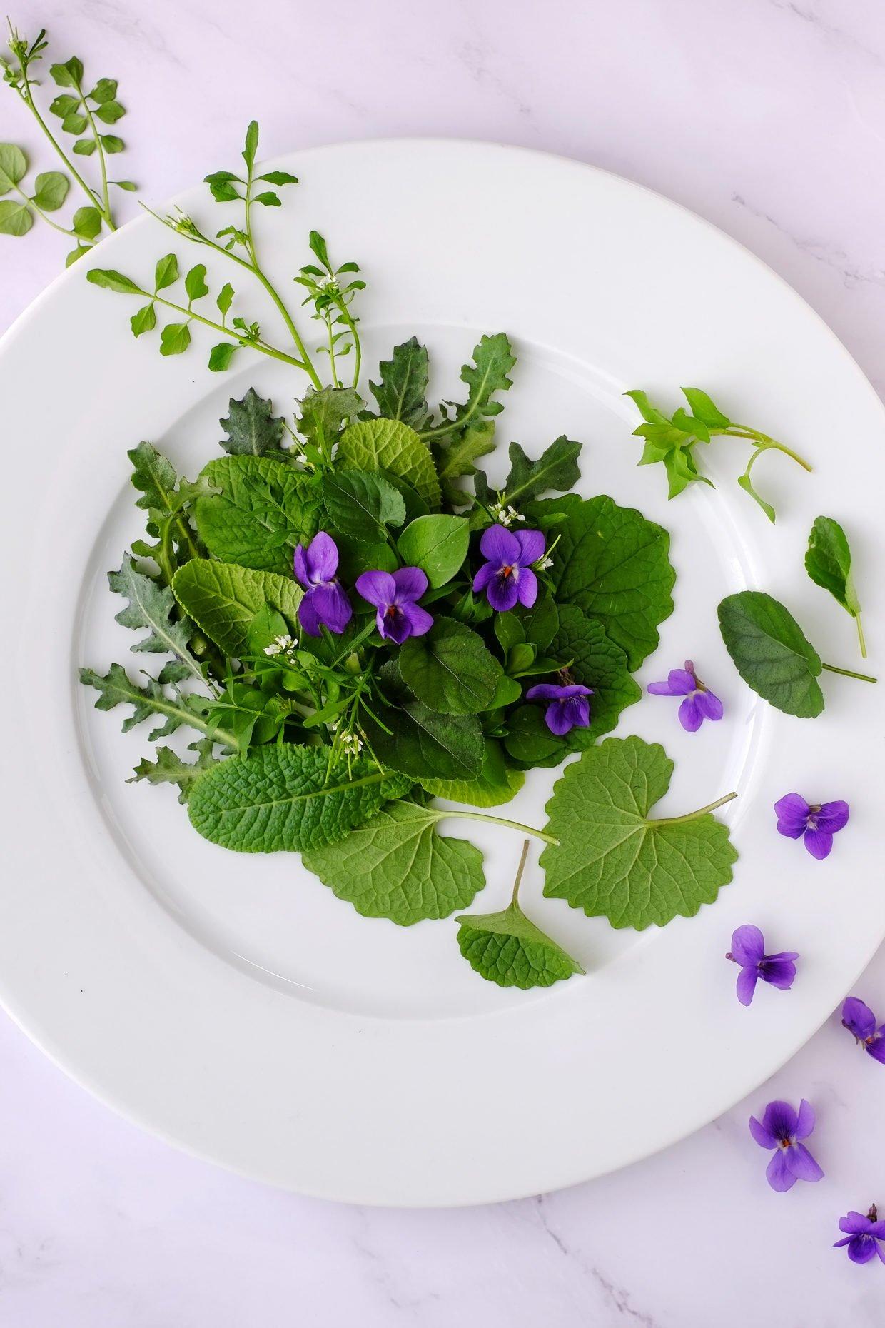 Misticanza d'inizio marzo con fiori di violetta e cardamine 74