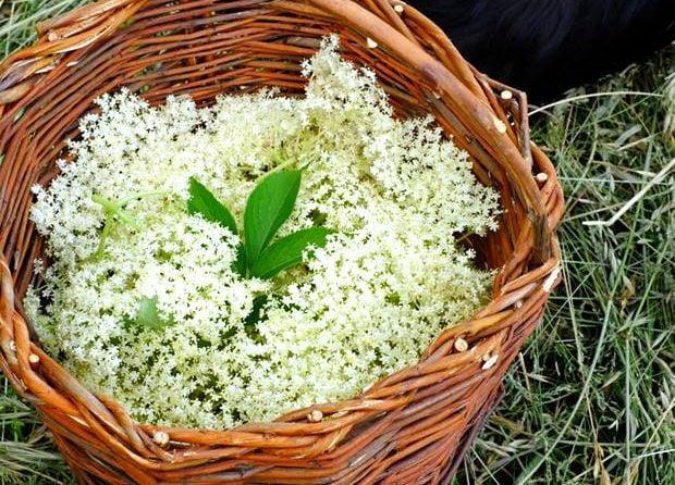 Passeggiata di riconoscimento delle erbe spontanee a Chiusure (SI) 7