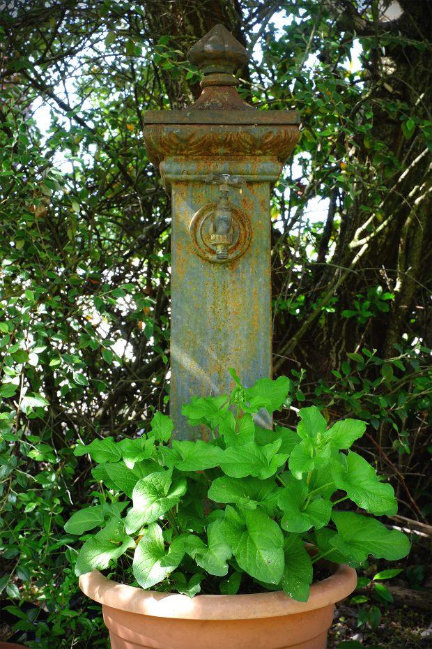 Insalata di spinacio selvatico Buon Enrico, arance e fiori d'acacia 2
