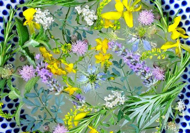 Le erbe solstiziali - Passeggiata di riconoscimento delle piante spontanee a San Giovanni d'Asso (SI) 7