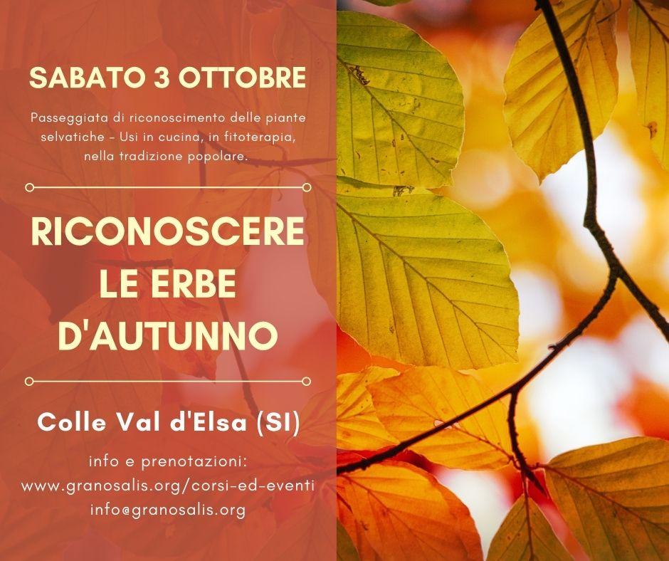 Riconoscere le erbe d'autunno a Colle Val d'Elsa (SI) 7