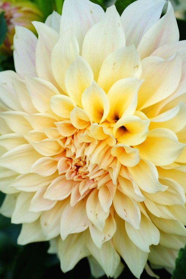 Puscina Flowers - Coltivare bellezza, senza tradire la natura 15