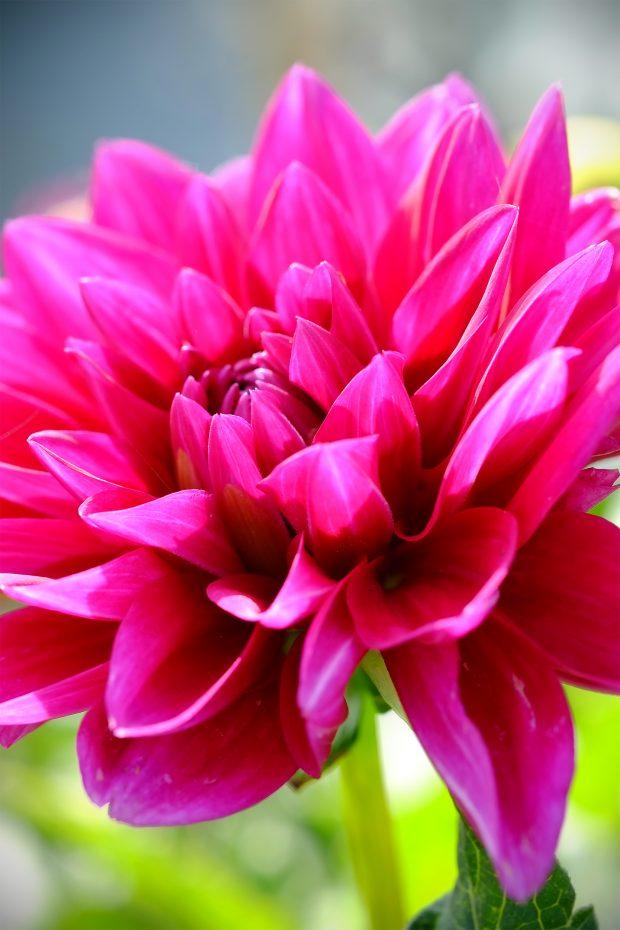 Puscina Flowers - Coltivare bellezza, senza tradire la natura 14