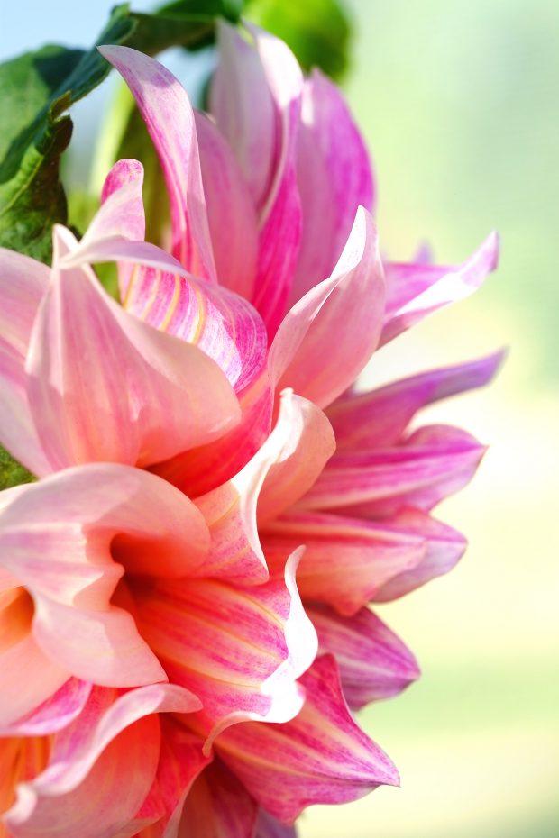 Puscina Flowers - Coltivare bellezza, senza tradire la natura 16