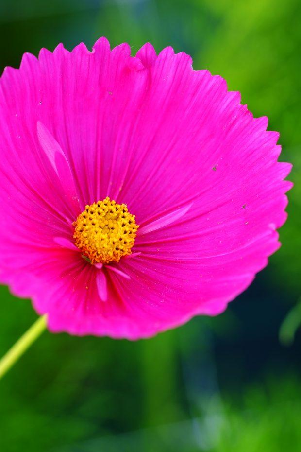 Puscina Flowers - Coltivare bellezza, senza tradire la natura 13