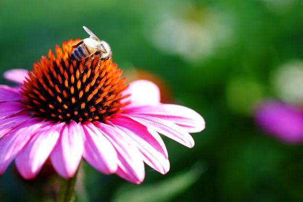 Puscina Flowers - Coltivare bellezza, senza tradire la natura 6