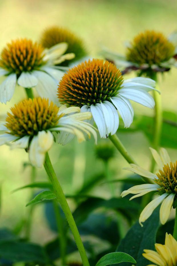 Puscina Flowers - Coltivare bellezza, senza tradire la natura 5