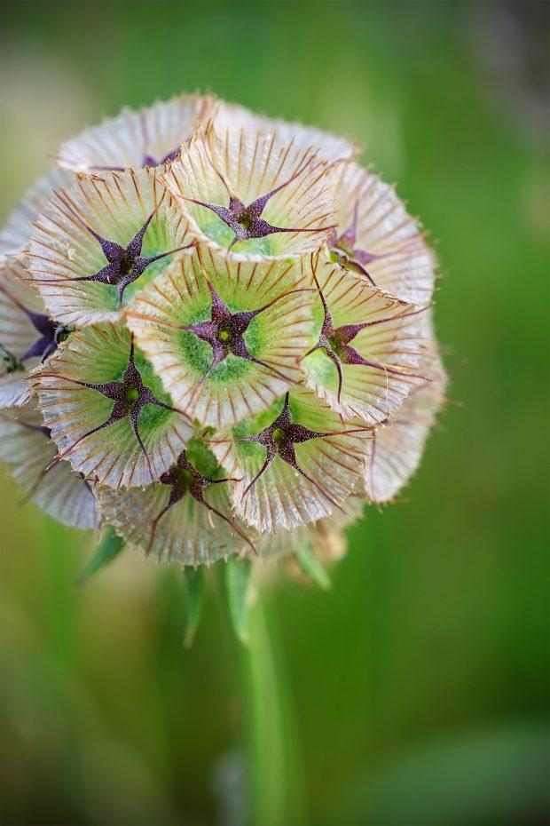 Puscina Flowers - Coltivare bellezza, senza tradire la natura 19