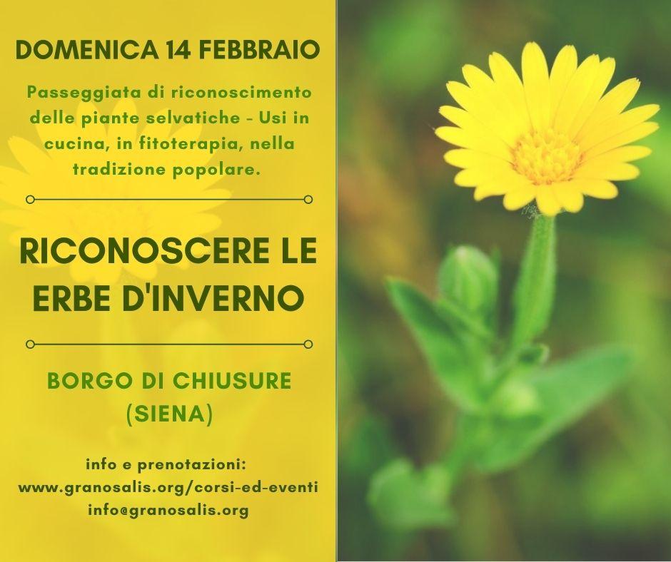 Riconoscere le erbe d'inverno a Chiusure (SI) 7