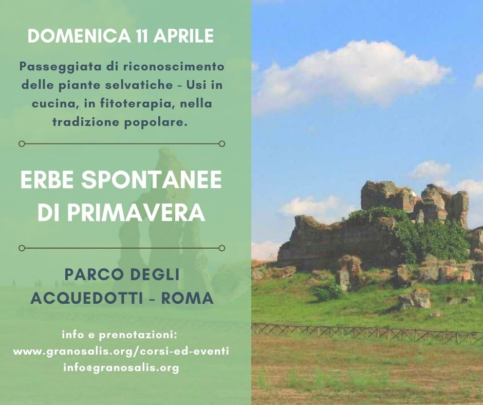 Corso di riconoscimento erbe a Roma 7
