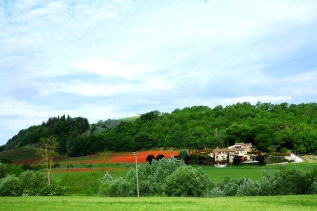 Trofie di grani antichi al pesto di fave e aglio orsino 2