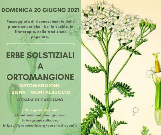 Erbe spontanee solstiziali a OrtoMangione 13
