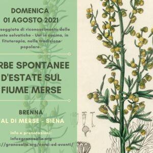 Passeggiata di riconoscimento delle piante spontanee a Brenna (SI) 6