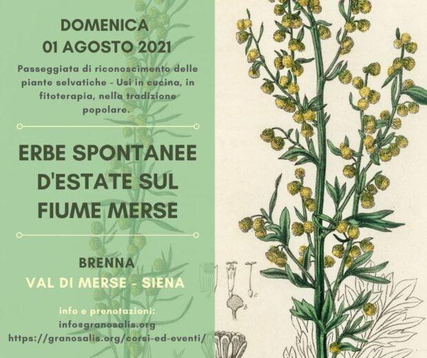 Passeggiata di riconoscimento delle piante spontanee a Brenna (SI) 43