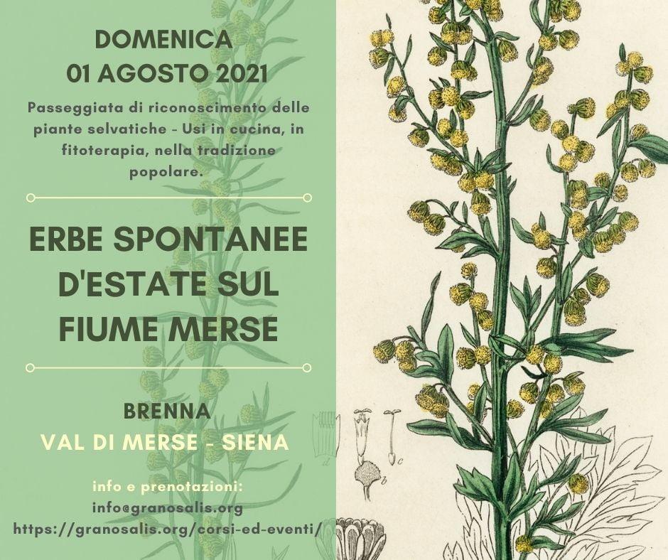 Passeggiata di riconoscimento delle piante spontanee a Brenna (SI) 7