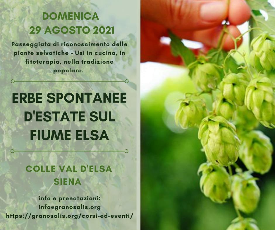 Passeggiata di riconoscimento delle erbe spontanee a Colle Val d'Elsa 7
