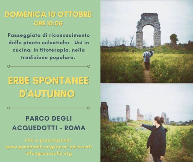 Corso di riconoscimento erbe a Roma 5