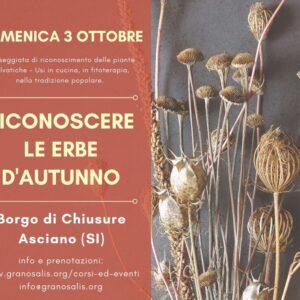 Erbe spontanee d'autunno - Chiusure (SI) 2