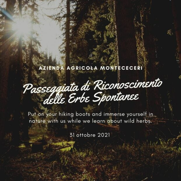 Corso di riconoscimento erbe spontanee a Firenze 23